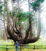 如此神秘的樹,你一定沒見過..-10-25-2015:640-10-24-12.jpg