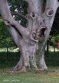 如此神秘的樹,你一定沒見過..-10-25-2015:640-10-24-13.jpg