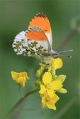 世界蝴蝶大全,終於找齊了,太漂亮了-7-19-2016:640-7-19-012.jpg