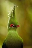 珍奇鳥類 -4-29-2018:016-4-29-015-美圖好文.jpg