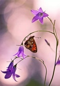 世界蝴蝶大全,終於找齊了,太漂亮了-7-19-2016:640-7-19-018.jpg