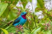 珍奇鳥類 -4-29-2018:017-4-29-016-美圖好文.jpg