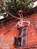 如此神秘的樹,你一定沒見過..-10-25-2015:640-10-24-4.jpg