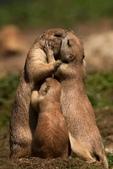 世上最幸福的家,就是爸爸愛媽媽--7-24-2015:640-7-23-8.jpg