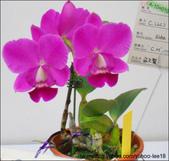 2011台灣國際蘭展-1:DSCN0274-1.jpg