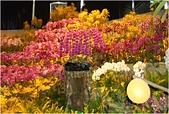 2016台灣國際蘭展圖片 -3-15-2016:DSCN1120-1.jpg