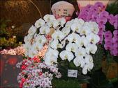 2010 台灣國際蘭展:100_4733-a.jpg