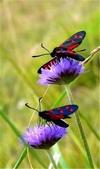 世界蝴蝶大全,終於找齊了,太漂亮了-7-19-2016:640-7-19-09.jpg