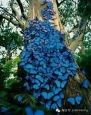 見過蝴蝶樹嗎?真是不看不知道!-7-15-2015:640-7-15-2.jpg