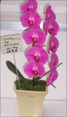 2010 台灣國際蘭展:100_4690-1.jpg