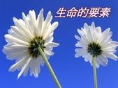 生命的要素..11-14-2013:投影片1.JPG