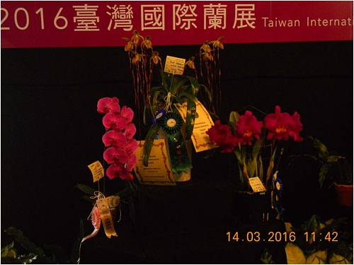 DSCN1148-1.jpg - 2016台灣國際蘭展圖片 -3-15-20156
