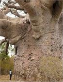 如此神秘的樹,你一定沒見過..-10-25-2015:640-10-24-14.jpg