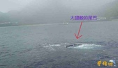 鯨魚:2012022502.jpg