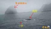 鯨魚:2012022503.jpg