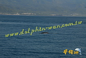 鯨魚:20110708-02.jpg