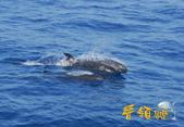 鯨魚:20110723-01.jpg