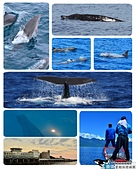 鯨魚:1020716-01.jpg