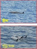 鯨魚:20120423-12-01.jpg
