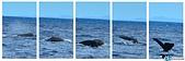 鯨魚:1020716-02.jpg