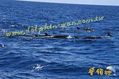 鯨魚:20110710-03.jpg