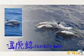 鯨魚:20120103-07.jpg