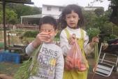 2012 3:2012 3 29拔紅蘿蔔 (55).JPG
