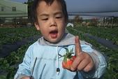2011 1:2011元旦採草莓 (12).JPG