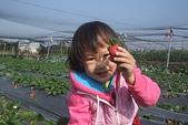 2011 1:2011元旦採草莓 (17).JPG