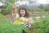2012 3:2012 3 29拔紅蘿蔔 (8).JPG