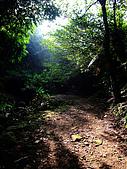 2009-0712-再訪小粗坑古道&石牛山驚險行:02-陽光灑落林間~頗有濃濃的古意.jpg