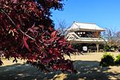20161126石手寺 松山城 咸陽島 (Day5):DSCN7184.JPG