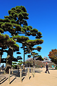 20161126石手寺 松山城 咸陽島 (Day5):DSCN7182.JPG