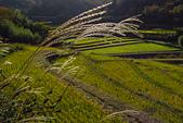 20161124小豆島千牧田與橄欖公園(Day3):IMG_5352.JPG