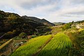 20161124小豆島千牧田與橄欖公園(Day3):IMG_5285.JPG