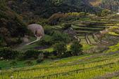 20161124小豆島千牧田與橄欖公園(Day3):IMG_5291.JPG