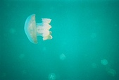 Palau:F1000010