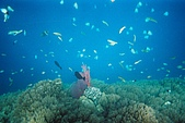 Palau:F1000012