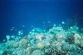 Palau:F1000014