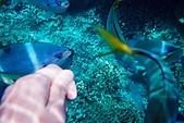 Palau:F1000018