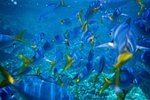 Palau:F1000019