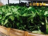 護膚保養:高山茶萃取3.jpg
