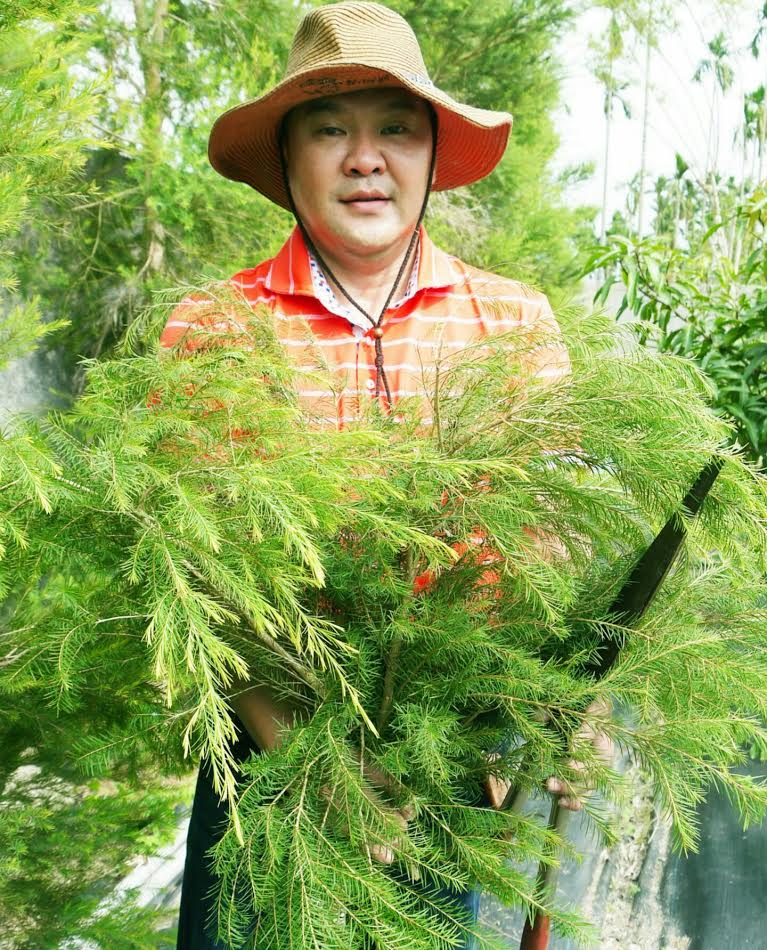護膚保養:茶樹2.jpg