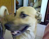 黃色小狗:DSC00032.JPG