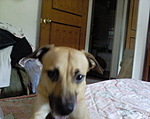 黃色小狗:DSC00043.JPG
