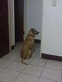 黃色小狗:DSC00046.JPG