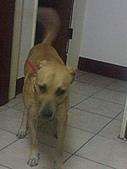 黃色小狗:DSC00047.JPG