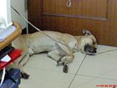 黃色小狗:DSC00068.JPG
