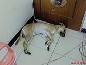 黃色小狗:DSC00070.JPG