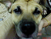 黃色小狗:DSC00073.JPG